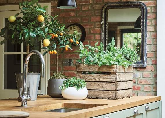 Go green at home with our guide to embracing houseplants